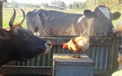 Farm Stay – The Story Behind the Story