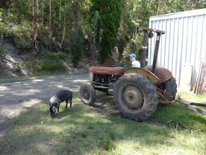 Pig and Tractor