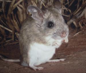 to_the_zoo_woohoo_hoping_mice